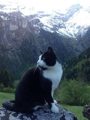 Ce chat alpin est très à l'aise sur les sentiers !