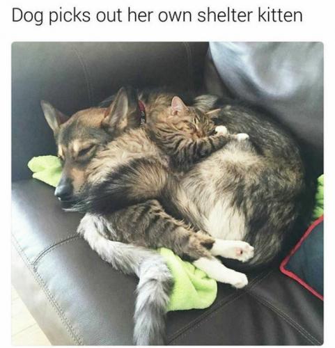 C'est le chien qui a adopté le chat !
