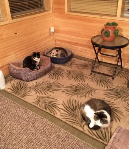 """Les """"trois chats"""" de mamie."""