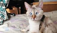Cette petite chatte, qui adore les boîtes en carton, a été envoyée par la Poste, par erreur...