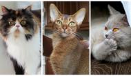 Que veulent dire les miaulements de votre chat ?
