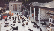 Le refuge AVA, une maison de retraite pour animaux !
