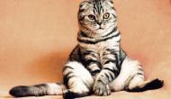 Mon chat peut-il vraiment VOIR dans le NOIR ?