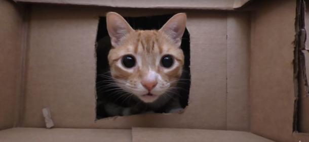 Une maison en carton
