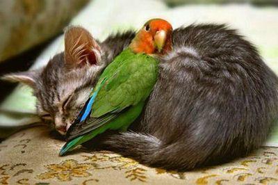Un chat et un petit oiseau