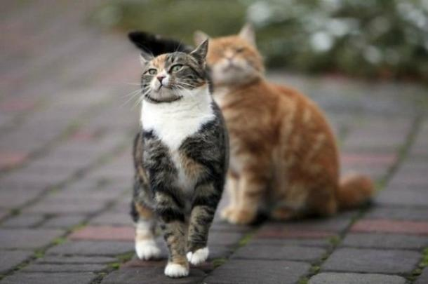 Ce chat malgré son handicap est devenu très agile....