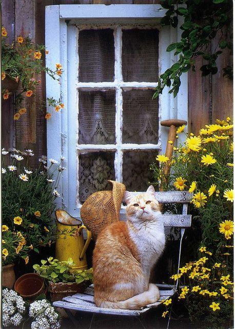 La chatte attendait sagement devant la porte, porteuse d'une bonne surprise !