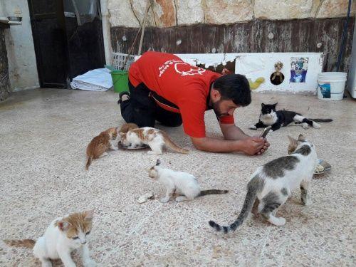 Sauver le plus de chats possibles