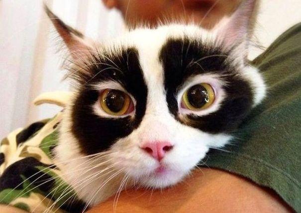 1. Le chat espion