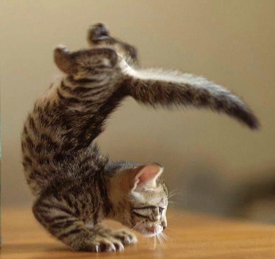 Du sport, chat va faire du bien !