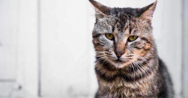 Comment s'occuper de son chat âgé ?