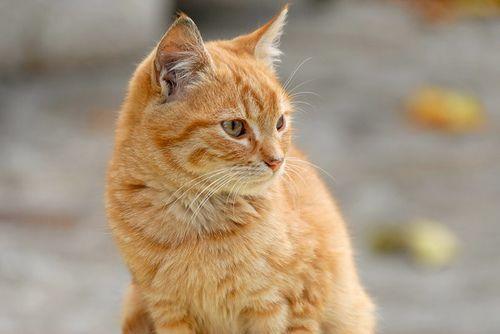 Ce chat roux a vécu plusieurs années sans sa famille...