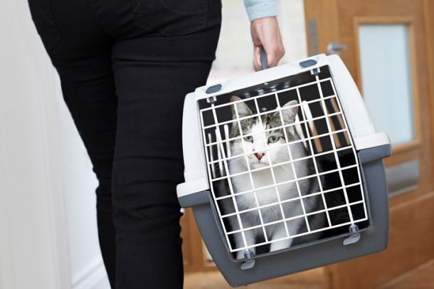 Ce chat n'aimait pas son refuge, il savait comment faire pour le quitter rapidement!