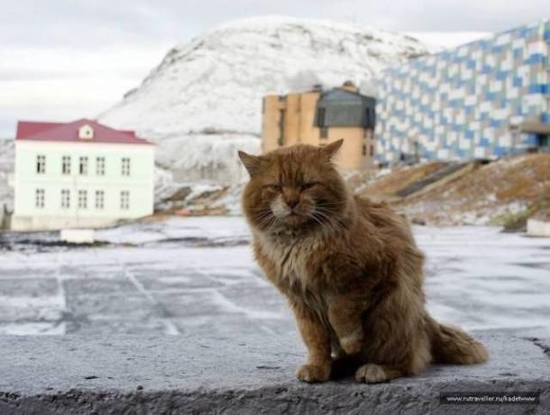 Comment ça, pas de chats ?