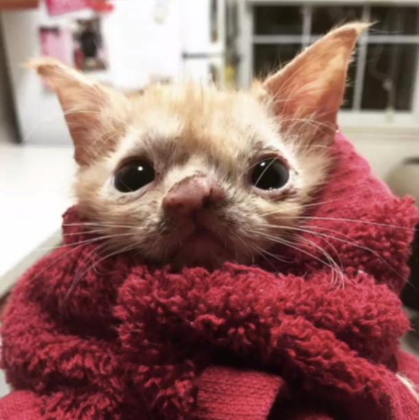 Une petite chatte bien spéciale