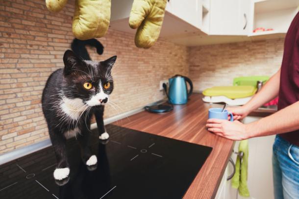 La cuisine n'est pas un moulin !