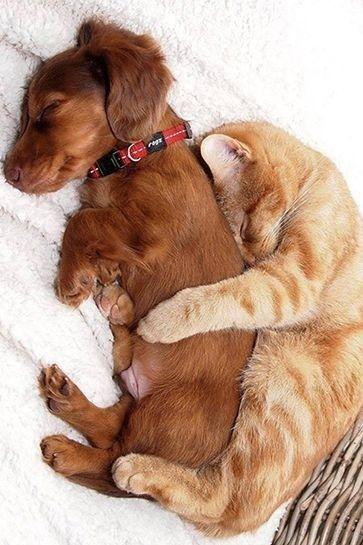 Les chats et les chiens peuvent très bien s'entendre, la preuve !