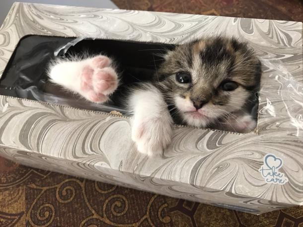 Je suis si petit que je peux me faufiler dans un paquet de mouchoirs !