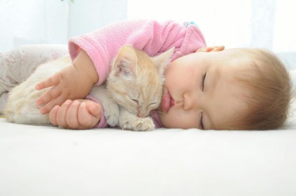 Chats et bébé, un monde parfait