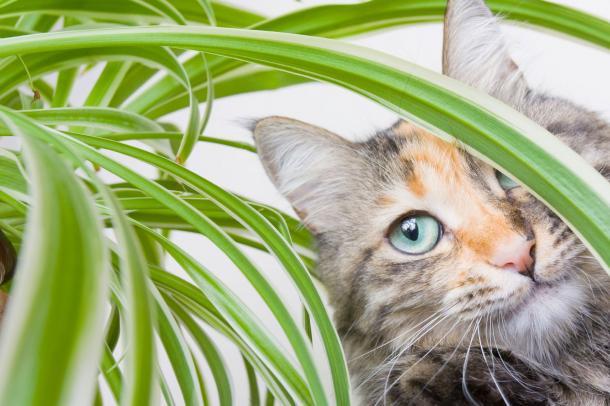 Chats et plantes
