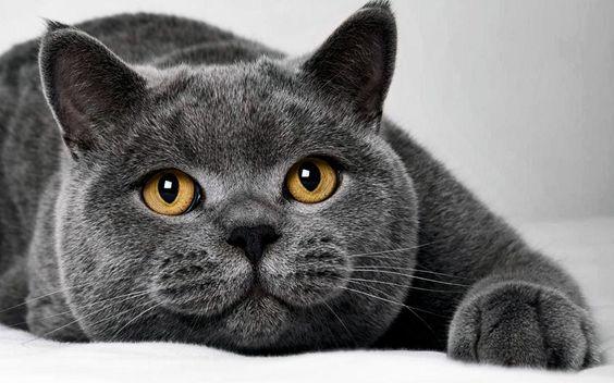 Ce petit chat était introuvable...