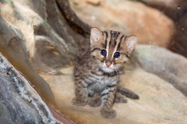 Un petit chat pêcheur adorable