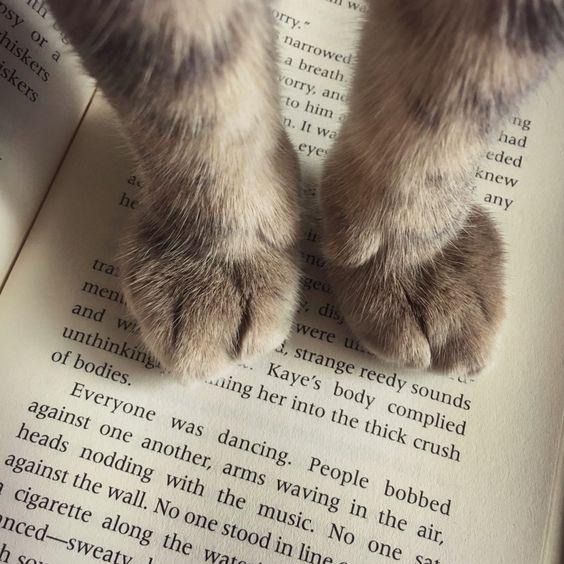 Un chat qui voulait lire, ou presque !