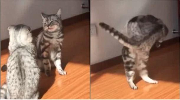 Combat de chats !