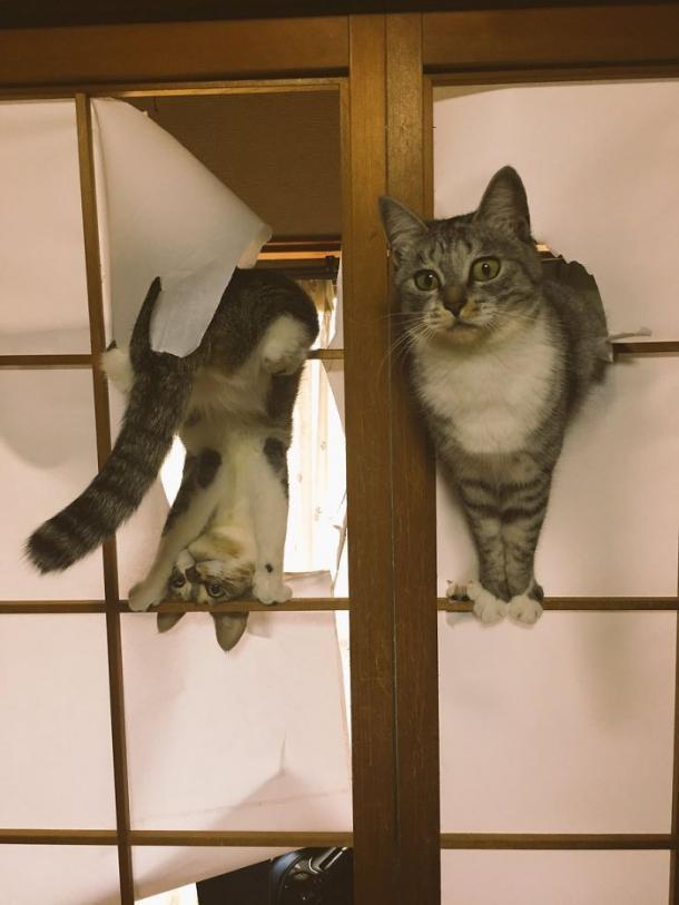 """""""Nous voulions juste ouvrir la porte, tu sais ? """""""
