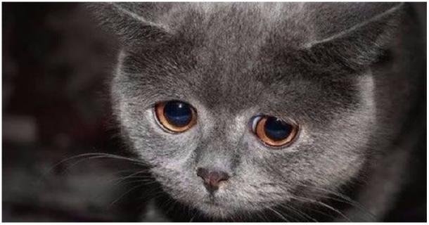 Ce chat perdu a eu la chance d'être recueilli !