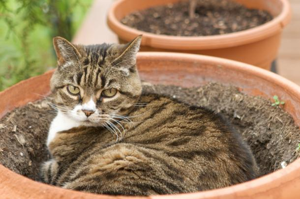Les plantes et les chats : une mission impossible