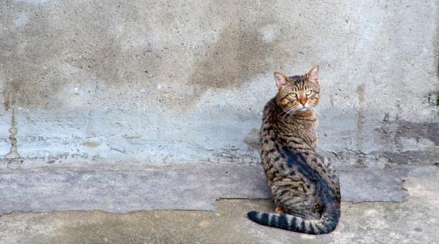 Vous allez CRAQUER pour l'histoire du chat VALENTIN