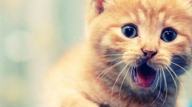 Si maman chat ADOPTE tout le monde, c'est pour ÇA