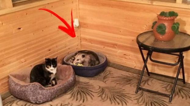 Une dame récupère trois chatons jusqu'à ce qu'elle se rende compte de quelque chose...