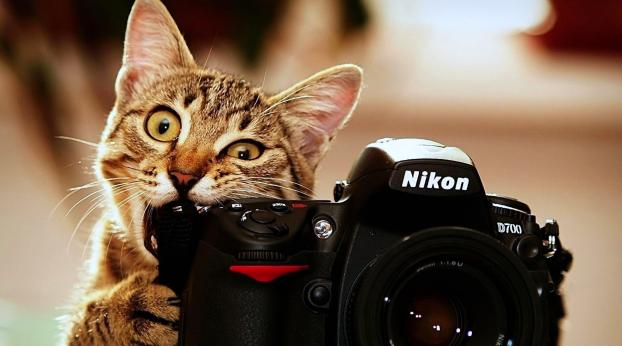 7 conseils pour faire de meilleures photos de votre chat.
