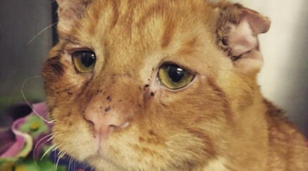 Un couple adopte un chat triste et malade... et le MIRACLE se produit !