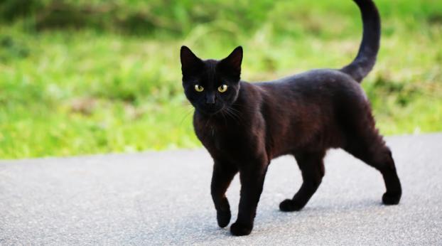 Pourquoi le chat Milo est la TERREUR du quartier