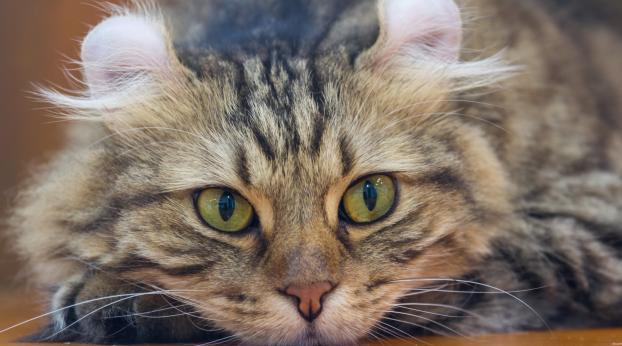 Voilà pourquoi ces chats de BALTIMORE ont BESOIN de vous