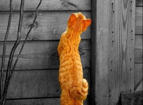 GERRY, le chat qui ADORE les PALACES !