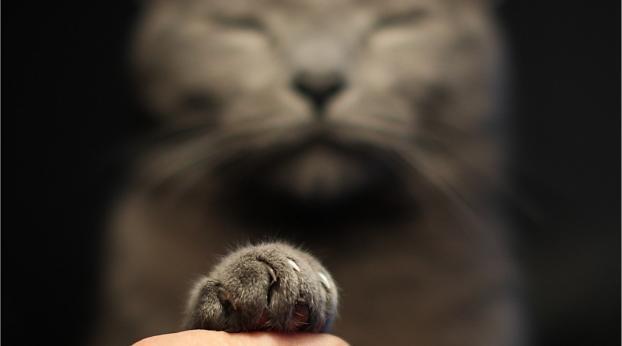 Le regard ÉTONNANT du chat Kevin va vous faire craquer !