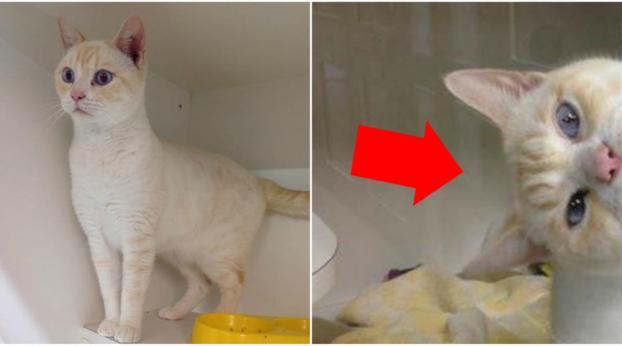 Resté trop longtemps dans un refuse, ce chat a trouvé LA solution pour se faire adopter !