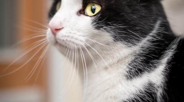 Un chat de Londres ressurgit à... Paris