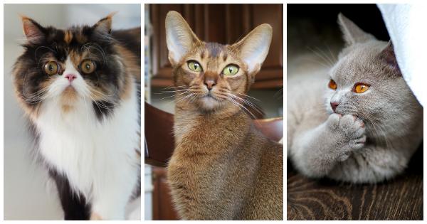Découvrez quelle race de chat vous correspond !