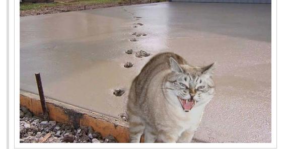 Voici des photos hilarantes qui prouvent que les chats sont vraiment une espèce... à part ;) !