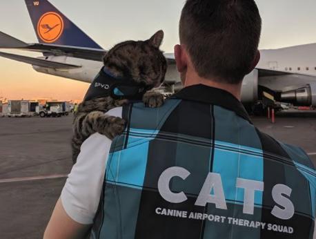 L'improbable mission de ce CHAT à l'AEROPORT