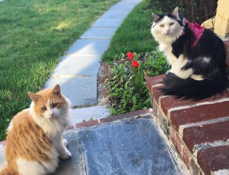 La TENDRE histoire de ces chats AMOUREUX