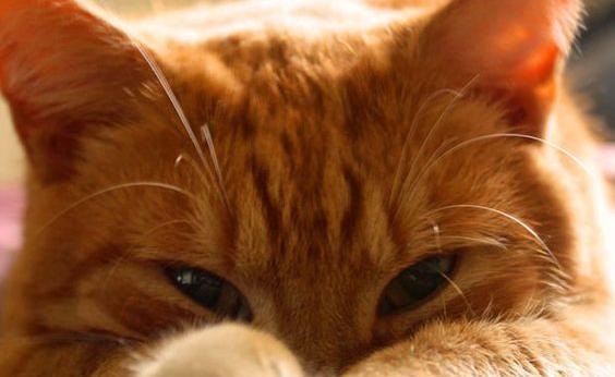 Parsley est le chat le plus SOCIABLE du monde