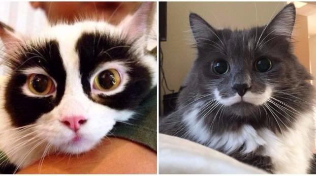 Des chats au pelage rigolo !