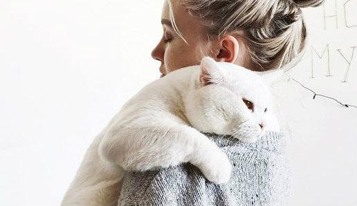 Les chats BLANCS sont très SENSIBLES, vrai ou faux ?