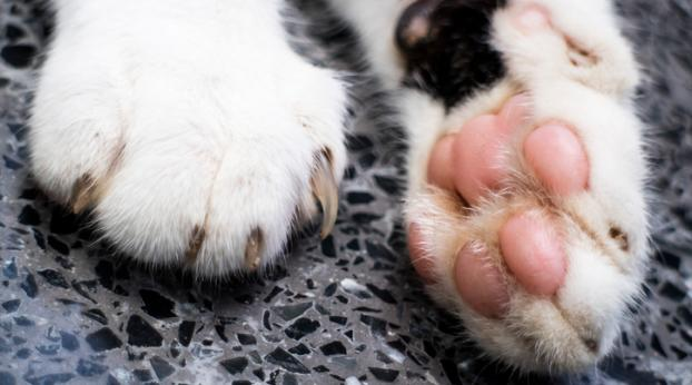 Ce chat adoooore un OBJET très spécial…